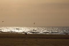 Rotterdam 2011 086 (D-Byte) Tags: kite beach strand scheveningen nederland solbeach nld provinciezuidholland