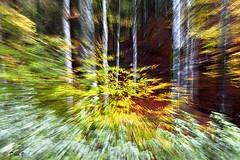 Nightmare acceleration (Dora Joey) Tags: autumn trees foglie alberi pain chaos control experiment autunno cansiglio confusione paura esperimento angoscia boscodelcansiglio newvisions