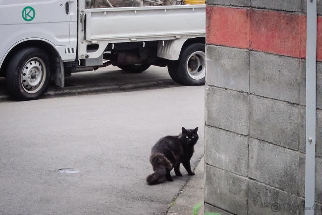 Today's Cat@2012-11-09