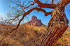 Natural Frame in the Valley (Jeff Clow) Tags: tree nature landscape western southwestern theoldwest professorvalley ©jeffrclow moabphototours jeffclowphototours