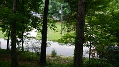 DSCN1427 (VerlynC) Tags: tree falling hickory