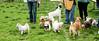 16-05-15_untitled_102 (Daniel.Lange) Tags: dog philadelphia dogs biscuit dogdayafternoon spado columbussquarepark