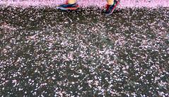 Feelin' Groovy (Robert Saucier) Tags: newyorkcity pink flowers newyork blur rose fleurs shoes centralpark flou feuilles souliers simonandgarfunkel img1373 feelinggroovy