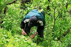 morel mushroom hunting near Lime Springs IA854A5286 (lreis_naturalist) Tags: county mushroom howard hunting reis iowa larry springs lime morel