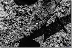 Charred (Bristol RE) Tags: wood tree fire timber ash char charred