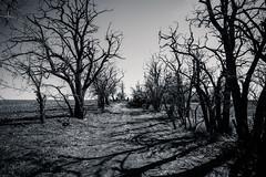 Walk Among Us (Pedalhead'71) Tags: trees washington farm creepy adamscounty bandoned creepsville
