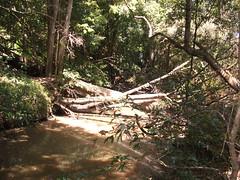 DSCF7042 (SEQ Catchments) Tags: rainforest subtropical lowland