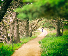 Point Lobos Path (CarbonNYC [in SF!]) Tags: mom hiking hike trail bonnie cypress pointlobos cypresses