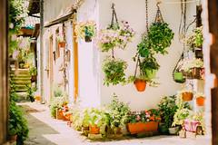 Sunny Garden (freyavev) Tags: street flowers urban plants sunlight house green garden 50mm colorful serbia streetphotography pots belgrade beograd srbija dvoriste dalmatinska vsco