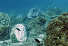 img_3759oa (www.linvoyage.com) Tags: sea thailand island sailing yacht corals racha        deadcorals