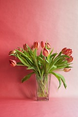 Tulpen #2, 2016 (Lexi Blue) Tags: pink stilllife orange flower green rosa objects stilleben tulip colored grn stillife blume arrangement bunt abstrakt arranged tulpe gestaltung gestaltet angeordnet objektfotografie arrangiert arrangedobjects canon6dmark3