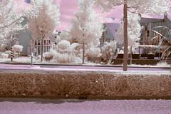 Purple (Herman1705) Tags: 35mm sony infrared hoya 25a a500 fullspectrum lithagon ennamnchen 600nm