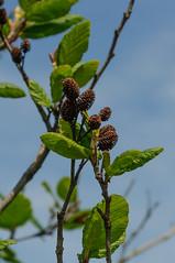 _DSC6698.jpg (newminaswilders) Tags: ca canada nature novascotia portjoli gardensorflowers