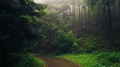 Eifel Paths (Netsrak) Tags: trees light shadow sun mist tree green nature grass fog forest way de landscape deutschland licht woods nebel outdoor path natur eifel gras grn landschaft sonne wald bume schatten baum nordrheinwestfalen weg dunst rheinbach forst