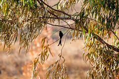IMG_7300L4 (Sharad Medhavi) Tags: bird canoneod50d birdsandbeesoflakeshorehomes