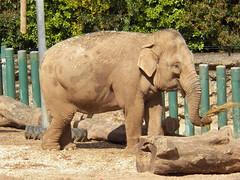 Belfast zoo (Kenny Belfast) Tags: belfast belfastzoo bellevuezoo kodakz990 kodakeasysharemaxz990