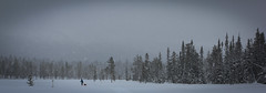 Sarek Winter Traverse 2012 (Steve Behaeghel) Tags: winter sweden traverse arctic backpacking wilderness snowshoes sarek laponia