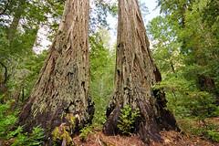 2012-04-14 Big Basin Redwoods State Park 003