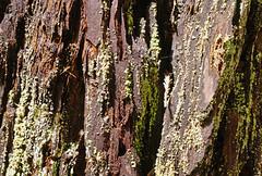 2012-04-14 Big Basin Redwoods State Park 039