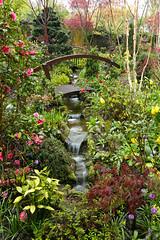 Garden stream in the spring rain (May 1st) (Four Seasons Garden) Tags: fourseasonsgarden