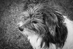 2 monty (pamelaadam) Tags: bw dog nature animal digital visions scotland spring aberdeenshire meetup drum fotolog april 2012 thebiggestgroup