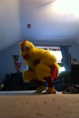 Chicken suit 52 (ChickenJay) Tags: bird chicken yellow happy costume mask egg wing beak suit talon hen birdbrain