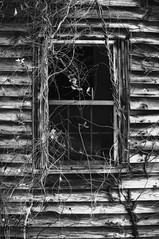 Don't look in the window! (explored) (Dennis Cluth) Tags: art window mono scary nikon spooky d90
