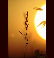 golden hour (la metà del sole) (swaily ◘ Claudio Parente) Tags: macro nikon poetry tramonto poesia magical luce goldenhour d300 nikond300 claudioparente galleryoffantasticshots