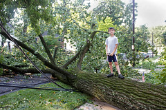 derechosaurus wrecks - big tree down (woodleywonderworks) Tags: auto trip house storm man tree lines car dc washington big wire power post wind live branches maryland utility blow damage electricity thunderstorm dig lawyer insurance gust fail homeowner derecho pepco
