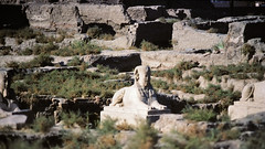 Luxor Egypt 1977 - Sphinx carving surrounded by abandoned material from ruined temples (edk7) Tags: africa archaeology statue sphinx architecture temple site ruin egypt carving 1977 luxor nikkormat edk7 af366