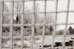 Winter Wonderland (MNTravelingMan84) Tags: winter snow nature beautiful beauty minnesota frost arboretum wilderness wonderland mn whiteout winterwonderland