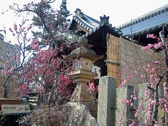 10 (KURISAWA Eisuke) Tags: japan nara plumblossom