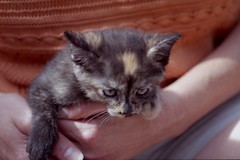 img-011 (steevithak) Tags: cats kittens