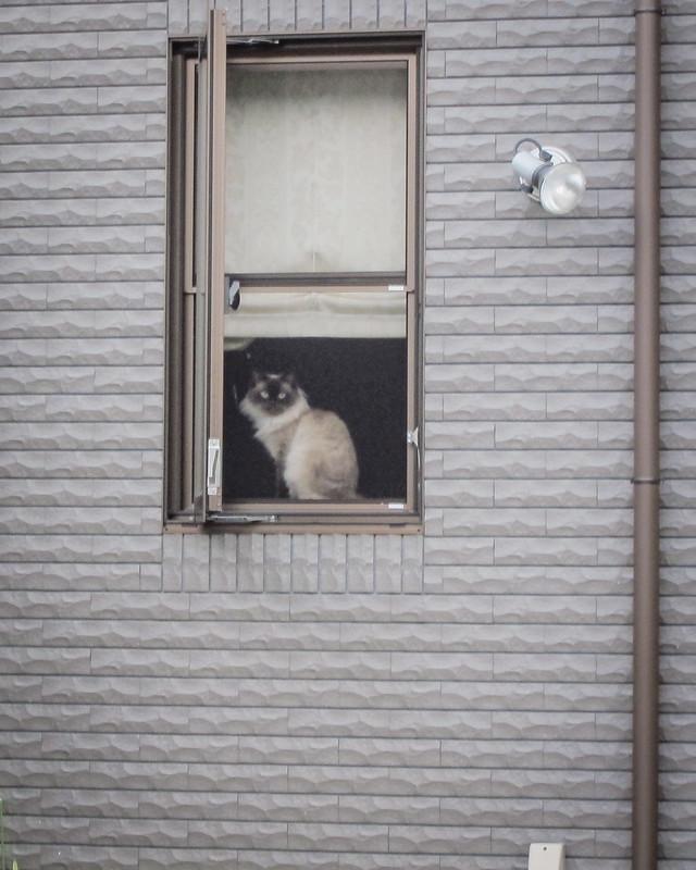Today's Cat@2012-08-10