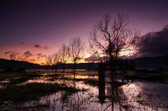 The Dead Lake (eggysayoga) Tags: sky bali lake tree beach indonesia landscape xpro nikon tokina atx cokin gianyar gnd8 tamblingan 1116mm d7000