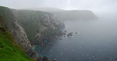 Stormy Hermaness II (Wrinzo) Tags: cliff storm rain islands scotland cliffs uccelli pioggia granbretagna seabirds gannet sula scogliere tempesta scogliera unst scozia morusbassanus isole hermaness sulabassana shtlend hermanessnaturalriserve