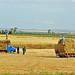 Tunisia-2697 - Bringing in the Hay