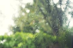 224/365 (Victoria Boulanger) Tags: green window rain blurry dof bokeh hurricane