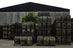 "Scotland Whisky Tour - Barrels outside cooperage • <a style=""font-size:0.8em;"" href=""http://www.flickr.com/photos/44019124@N04/8150926977/"" target=""_blank"">View on Flickr</a>"