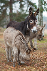 (derfian) Tags: animals sweden sverige djur stergtland sna jrnlunden snor hallstangar