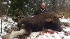 Moose Hunting In Estonia