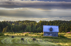 Abandonned Morning (Danny VB) Tags: morning flowers trees summer sun sunlight house canada field grass sunrise canon eos quebec august gaspesie abandonned 6d abandonnedhouse maisonabandonne canon6d ef70200mmf28lisiiusm abandonnedmorning