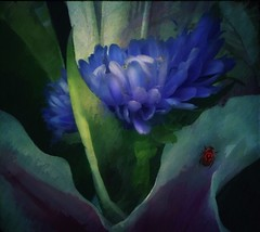 Still Life (jimlaskowicz) Tags: stilllife painterly flower art vintage garden botanical flora colorful artistic beetle blues textures layers impressionistic iphonography