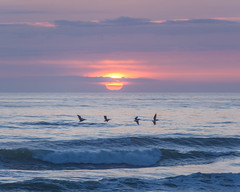 Four Pelicans and a Pastel Sunset (pixelmama) Tags: sanfrancisco california sunset beach pelicans waves pacificocean oceanbeach sloatblvd pasterl pixelmama