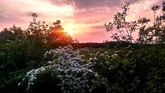 Sonnenuntergang / Sunset (r.stopable1) Tags: sunset afterglow sonnenuntergang abendrot wolken clouds weissdorn hawthorn eschede sdheide cellerland lowersaxony niedersachsen landscape landschaft natur nature