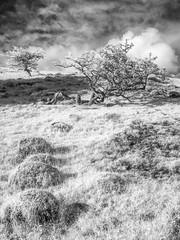Mennock Wood_2 (Dylan Nardini) Tags: uk trees light sky nature lines clouds ir scotland countryside sanquar infrared shape mennock