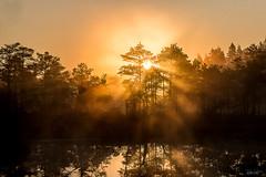 Valgusmuusika (rene j) Tags: morning sunrise bog sunbeams hommik raba pikesetus pikesekiired