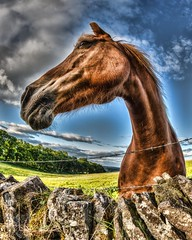 Say, why the long face? (D-W-J-S) Tags: horse fisheye tokina 1017mm hdr