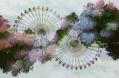 -hydrangea fantasia- (Hodaka Yamamoto) Tags: summer flower film doubleexposure double multipleexposure negative ferriswheel hydrangea filmcamera doubles multiexposure filmphotography