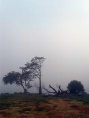 SOLITUDE (Vagner Eifler) Tags: brasil solitude portoalegre cristal árvore homem lagoguaíba riograndedosul frio solidão árvores cerração píerbarrashopping